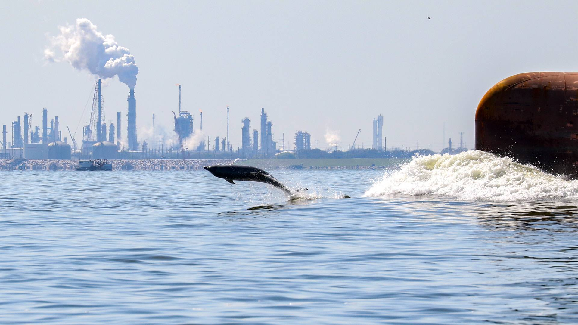 EIH research yields high-impact data about dolphins in Galveston Bay
